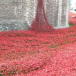 A Sea of Poppies at the Tower of London - November 2014