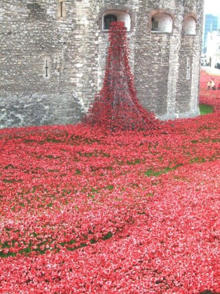 Poppies at the Tower of London (Picture by Ian Valentine) | Ian Valentine