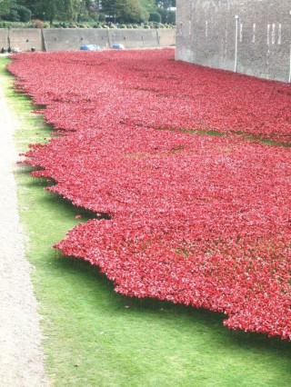 A sea of poppies, one for each of the over 800,000 people from the UK and British Commonwealth who were killed during WW1    Ian Valentine