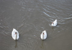 The Three Avian Friends