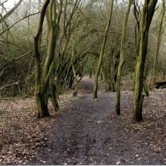 Wivenhoe wood in winter | Mike Downes
