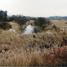 The marsh to west of Wivenhoe | Mike Downes