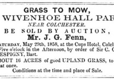 Grass to Mow at Wivenhoe Hall Park