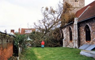 The fallen Lime Tree in the churchyard - consequence of a gale in 1987 | Wivenhoe Memories Collection