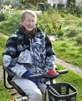 Daphne Meyers in 2015 at the Allotments - a familiar sight around Wivenhoe on her buggy | Photo by Peter Hill