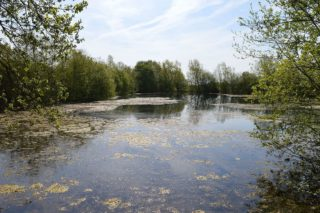 Wivenhoe gravel pit now designated a SSSI filled with water