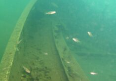 The Wreck of the Cecil Rhodes in Lake Tanganyika